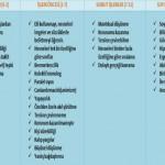Piaget'e Göre Zihinsel Gelişimi Dönemleri ve Özellikleri