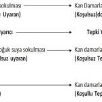 klasik kosullanma ornek 150x150 2013 resmi yazışma kuralları ve örnekleri