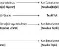 Klasik Koşullanma Örnekleri